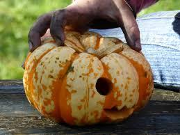 free images finger food produce dirt autumn pumpkin