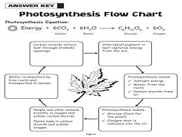 photosynthesis cellular respiration worksheet free worksheets