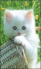 imagenes de animales whatsapp fondos de pantalla para whatsapp gratis de animales banco de