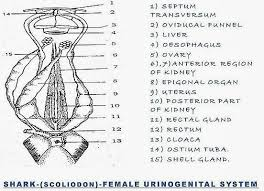 frog reproductive system fish reproductive system comparision