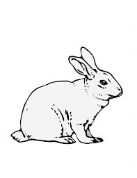 best photos of bunny rabbit coloring pages disney thumper