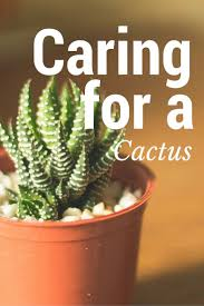 25 best indoor cactus ideas on pinterest cactus cactus plants