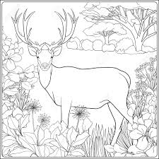 forest coloring pages virtren com