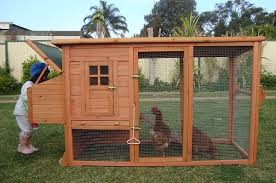 backyard chicken coops plans with inside of chicken coop designs