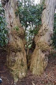 the survivor u2013 take one tree greenbenchramblings