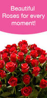 Flowers Information - rose flower varieties and types of roses theflowerexpert