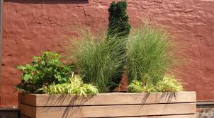 roof garden plants the challenges of rooftop gardening the best suited plants for