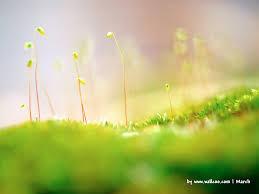 Những bài hát về mùa xuân hay nhất