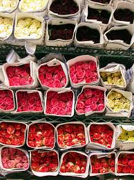 flower wholesale field of flowers wholesale high quality wholesale flowers south