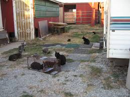 what happens to feral cats when their food provider leaves
