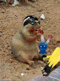 20 groundhog pictures ideas happy groundhog