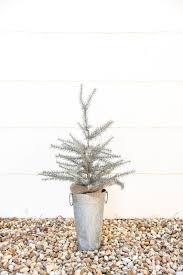 favorites where to buy mini trees iron twine