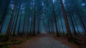 nature forest tree tree beautiful road road the way path path mall