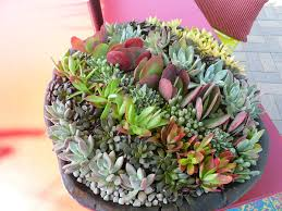 succulent arrangements 10 unforgettable succulent planter arrangements