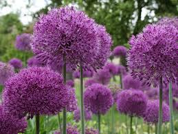 11 blooming bulbs hgtv