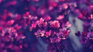 Cute Flower Wallpapers - purple flowers wallpaper