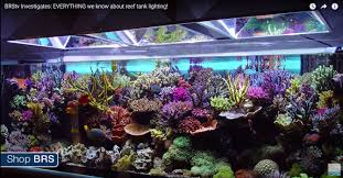 Stoneham Zoo Lights by Is Aquaforest The Next Evolution Of Zeolite Use Reef2reef