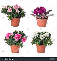set indoor plants flowerpots on white stock photo 83994523