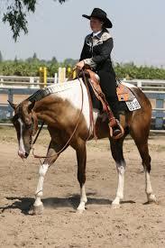 buckskin paint horse gelding western by horsestockphotos on