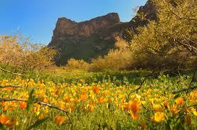 flowers tucson flowers in arizona favorite places spaces
