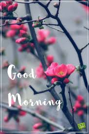 morning blossom wallpapers best 25 gud morning wishes ideas on pinterest gud morning pics