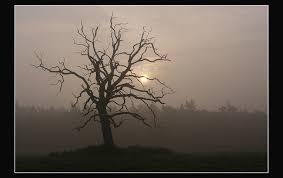 the dead oak tree once again by jchanders on deviantart