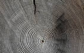 free photo tree grain texture wood annual rings structure max pixel