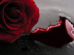 The Forever Rose 31 Best Rosas Images On Pinterest Black Black Roses And Flowers