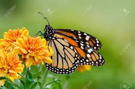 butterfly background stock photos royalty free business images
