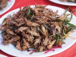 insectes cuisine plat des insectes frits image stock image du cuisine 33368745