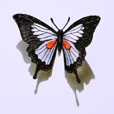 draw a butterfly with 3d pen maypop studio