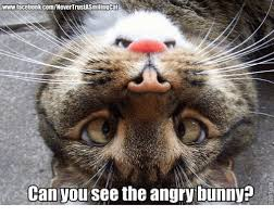 Angry Bunny Meme - 25 best memes about angry bunny angry bunny memes