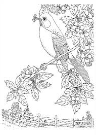 nature coloring pages bird on tree coloringstar