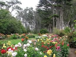 Fort Bragg Botanical Garden Dahlias The Attraction In August Picture Of Mendocino