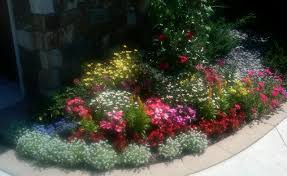 heat loving plants the heat loving plants in this annual bed are also loving the
