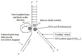 bch5425 molecular biology and biotechnology