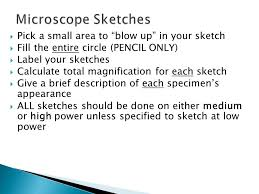 identify the parts of a compound light microscope and explain