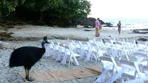 wedding arches cairns wedding crasher puts guests in a flap in fnq cairns post