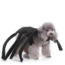Spider Halloween Costume Dogs Buy Wholesale Furry Dog Costume China Furry Dog