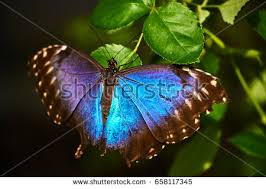 beautiful colorful butterfly stock photo 658117345