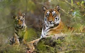 New Jersey Wildlife Tours images Best of india wild life tour intense india tours jpg