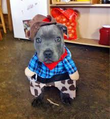 Pitbull Dog Halloween Costumes 23 Dogs Cats Halloween Costumes Pictures