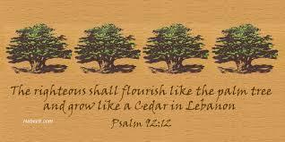 cedar of lebanon in the bible psalm 92 12