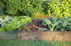 Vegetable Beds Garden Beds Raised Vegetable Bed Harvest To Table