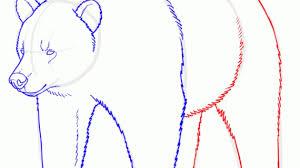easy draw bear drawing pencil