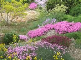 rock garden tips and plants hometalk