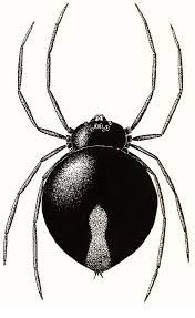 Small Black Flying Bugs In Bathroom Household Bugs