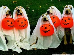 happy halloween dog pictures tianyihengfeng free download high