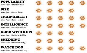 all about dogs interesting facts about german shepherds