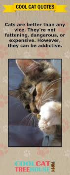 Awesome Quotes About Cats Being - cats are the inspiration on living a joyful life enjoy these words